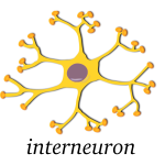 Vector image of neuron
