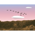Geese over forest