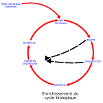 eutrophisation cycle