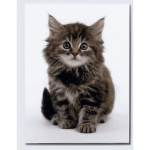 Sweet kitten vector image