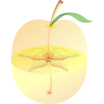 AppleAnatomy