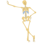 Standing skeleton vector image