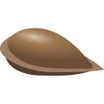 Vector image of apple seed