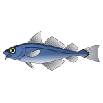 Codfish vector illustration