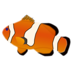 Amphiprion percula fish vector illustration