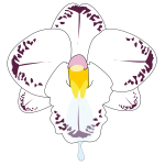 Clip art of wild orchid flower in color