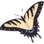 Vector image of tropical butterfly
