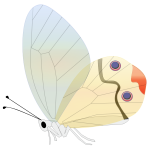 Comic butterfly vector illustration