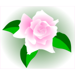 Pink rose in a frame