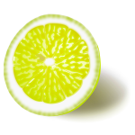 Lemon or lime vector image