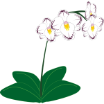 Image of a white orchid plant