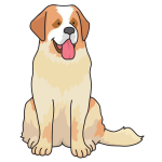 dog - Saint Bernard