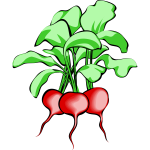Vector image of radishes
