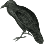 Vector image of dark colored raven in monotone