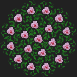 rose design blackBG
