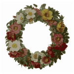 rose wreath color