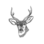Deer head with horns vector image