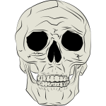 Vector illustration of real human skull