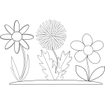 Vector graphics of three coloring book flowers