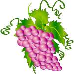 Vector image of bunch of grapes