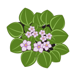 African violets with leaves vector clip art