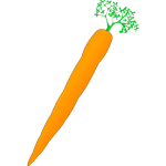 Vector image of orange carrot