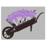 wheel barrow planter lavender