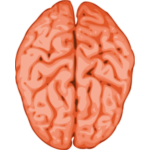 Vector image of a brain