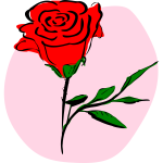 Vector graphics of coloured rose